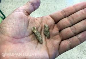 Dientes de neandertal encontrados en la campaña de 2016